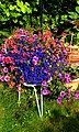 Blütenträume - panoramio (1).jpg