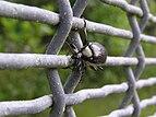 Black beetle 02.jpg