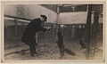 Black foxes owned by Spring Park Black Fox Company, Limited Photo D (HS85-10-26277).jpg
