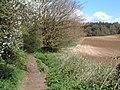 Bladen Woodland - geograph.org.uk - 162339.jpg