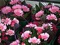 Blumensträuße in pink.JPG
