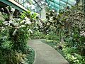 Bogor Botanical Gardens Java49.jpg