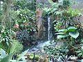 Bogor Botanical Gardens Java50.jpg