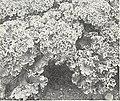 Bolgiano's spring 1968 (1968) (20203208658).jpg