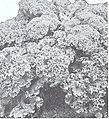 Bolgiano's spring 1971 (1971) (20203214328).jpg