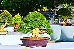 Bonsai in Thailand by Trisorn Triboon 5.JPG