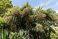 Border flowering palms Victorian garden Quex House Birchington Kent England.jpg