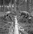 Bosbewerking, arbeiders, boomstammen, gereedschappen, Bestanddeelnr 251-7937.jpg