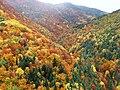 Bosque Fanlo-Sarvisé (Huesca, Pirineo Aragonés).JPG