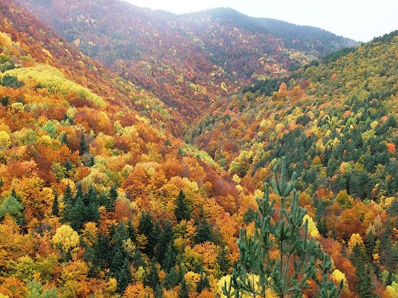 Parque Nacional de Ordesa y Monte Perdido 800px-Bosque_Fanlo-Sarvis%C3%A9_%28Huesca%2C_Pirineo_Aragon%C3%A9s%29