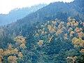 Bosque mixto chiguayantino2.jpg