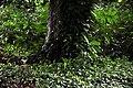Botanic garden limbe6.jpg