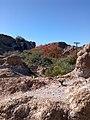 Boyce Thompson Arboretum, Superior, Arizona - panoramio (19).jpg