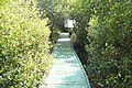 Bridged pathway in Coringa 3.jpg