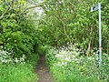 Bridleway From Priesthorpe Lane - geograph.org.uk - 1320113.jpg