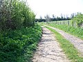 Bridleway from Hammer Lane - geograph.org.uk - 1287068.jpg