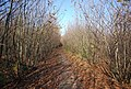 Bridleway through Hurst Wood - geograph.org.uk - 1570667.jpg