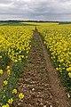 Bridleway to Parsonage Farm - geograph.org.uk - 436822.jpg