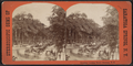 Broadway, Looking North, Saratoga, N.Y, from Robert N. Dennis collection of stereoscopic views.png