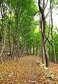 Bruce Trail in Hamilton, Ontario.jpg