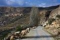 Bsaira District, Jordan - panoramio (9).jpg