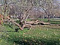 Budapest, XIV. kerület, Pillangó park Sütkérező öreg Pinokkió - panoramio.jpg