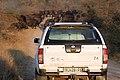 Buffalo, Kruger National Park, South Africa (14800272919).jpg
