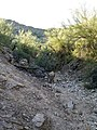 Butcher Jones Trail - Mt. Pinter Loop Trail, Saguaro Lake - panoramio (66).jpg