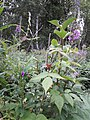 By ovedc - Talkeetna - 19.jpg