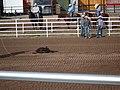 CFD Tie-down roping Blake Ash -5.jpg