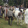 COLLECTIE TROPENMUSEUM President Jomo Kenyatta kijkt toe bij de keuring van stamboekvee tijdens de Eldoret Agricultural Show TMnr 20038663.jpg