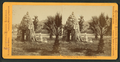 Calistoga Springs, Grotto of Petrified Wood, by Muybridge, Eadweard, 1830-1904.png