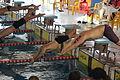 Campeonato de España de Natación Paralímpica por Selecciones Autonómicas 2015 I 06.JPG