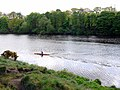 Canoeist on the River Tyne - geograph.org.uk - 1281926.jpg