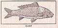 Carp Page 508.jpg