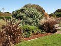 Centennial park in Sydney (08).jpg