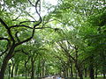 Central Park in Manhattan, New York City, United States of America (9861295675).jpg