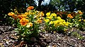 Chadwick Arboretum and Learning Gardens (34737275121).jpg