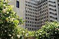 Charity Hospital NOLA.jpg