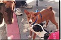Chimba and other dogs at SF Animal Care and Control.jpg