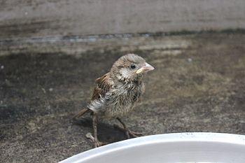 Chimneybird.jpg