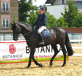 Irish Sport Horse Irish breed of horse