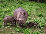 Chitwan National Park (2010)-68.jpg