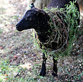 Church of St Mary the Virgin, Shipley, West Sussex, England ~ churchyard sheep 02.JPG