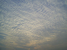 A A large field of cirrocumulus clouds in a blue sky, beginning to merge near the upper left.