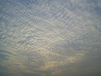 Cloud -  A large field of cirrocumulus stratiformis