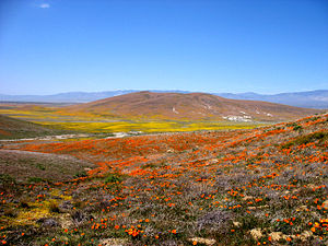 Fairmont Butte - Image: Collage of Flowers (2371743957)