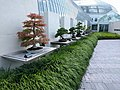Como Park Zoo and Conservatory - 04.jpg
