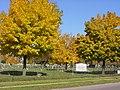 Concordia Cemetery2.jpg