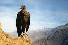 Condor02 ST 98.jpg